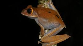 Bright Frogs Wallpaper HD