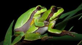 Bright Frogs Wallpaper HQ