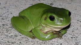 Bright Frogs Wallpaper High Definition