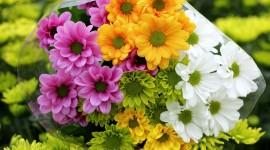 Chrysanthemum Bouquet Photo
