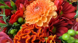 Chrysanthemum Bouquet Wallpaper For IPhone