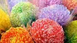 Chrysanthemum Bouquet Wallpaper HQ