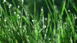 Early Morning Dew Photo Download