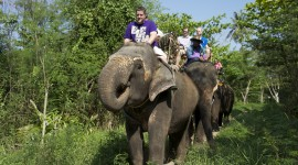 Elephant Ride On Image