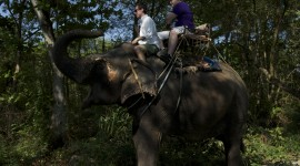 Elephant Ride On Image Download