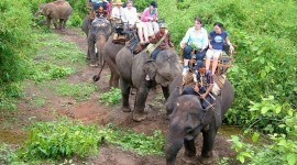 Elephant Ride On Image#1