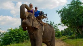 Elephant Ride On Photo Download