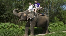 Elephant Ride On Photo Download#1