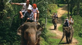 Elephant Ride On Photo Free