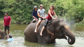 Elephant Ride On Photo Free#1