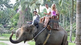 Elephant Ride On Photo#1