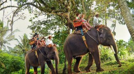 Elephant Ride On Picture Download