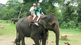 Elephant Ride On Wallpaper Download
