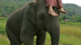 Elephant Ride On Wallpaper For IPhone