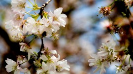 Flowers Branch Desktop Wallpaper