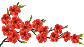 Flowers Branch Image