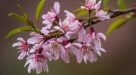 Flowers Branch Photo