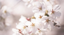 Flowers Branch Photo Download