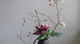Flowers Branch Wallpaper For Mobile#1