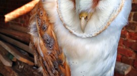Owl Chick Wallpaper For IPhone