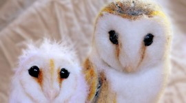 Owl Chick Wallpaper For PC