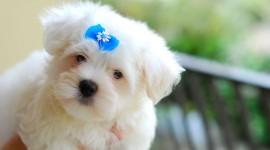 Puppy Desktop Wallpaper For PC