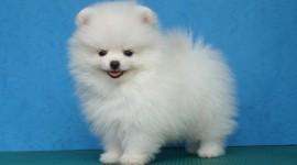 Puppy Wallpaper 1080p