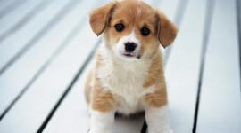 Puppy Wallpaper Download Free