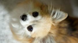 Puppy Wallpaper For Desktop
