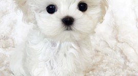 Puppy Wallpaper For IPhone