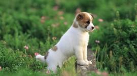 Puppy Wallpaper Free