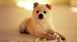 Puppy Wallpaper Full HD