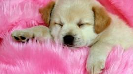Puppy Wallpaper Gallery