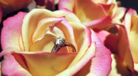 Ring In Roses Photo