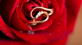 Ring In Roses Photo Download