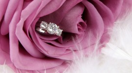 Ring In Roses Picture Download