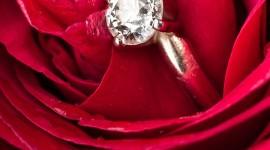 Ring In Roses Wallpaper For Mobile