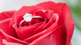 Ring In Roses Wallpaper Gallery