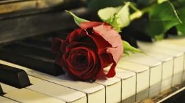 Rose Piano Photo