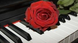 Rose Piano Photo Free