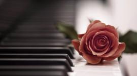 Rose Piano Wallpaper