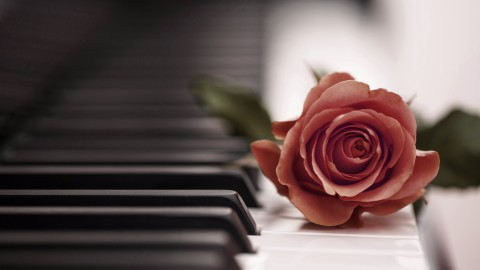 Rose Piano wallpapers high quality