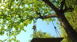 Swing Tree Desktop Wallpaper HD