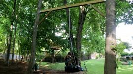 Swing Tree Photo Free