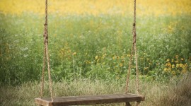Swing Tree Wallpaper For Android