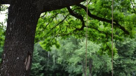 Swing Tree Wallpaper For IPhone#1