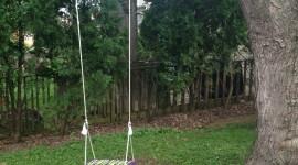 Swing Tree Wallpaper For Mobile#2