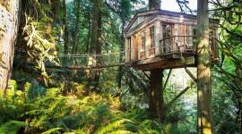 Tree Houses Best Wallpaper