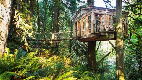 Tree Houses wallpapers high quality