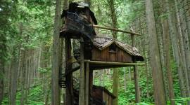 Tree Houses Desktop Wallpaper